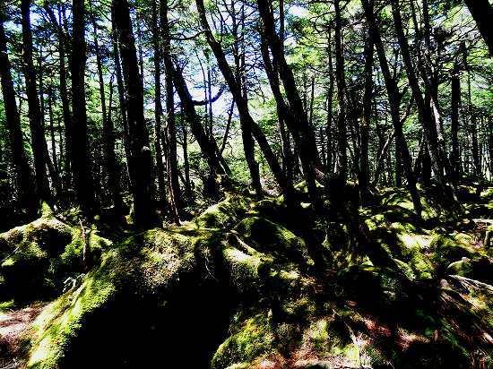 11-1北ヤツ-苔の森.jpg