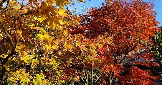 11-中庭の秋.jpg
