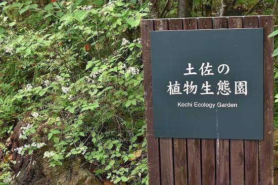 11土佐植物生態園.jpg